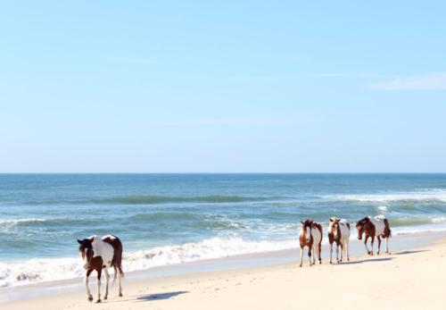 Assateague Dream